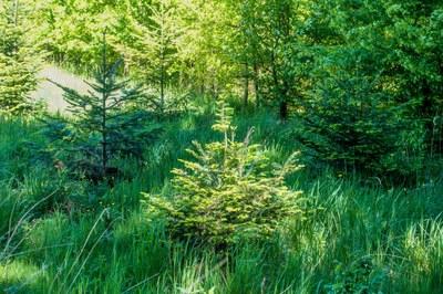 AdobeStock  Wald 343187564