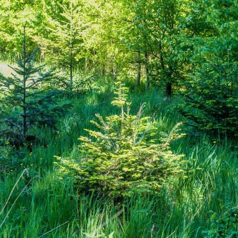 AdobeStock  Wald 343187564. Vergrösserte Ansicht